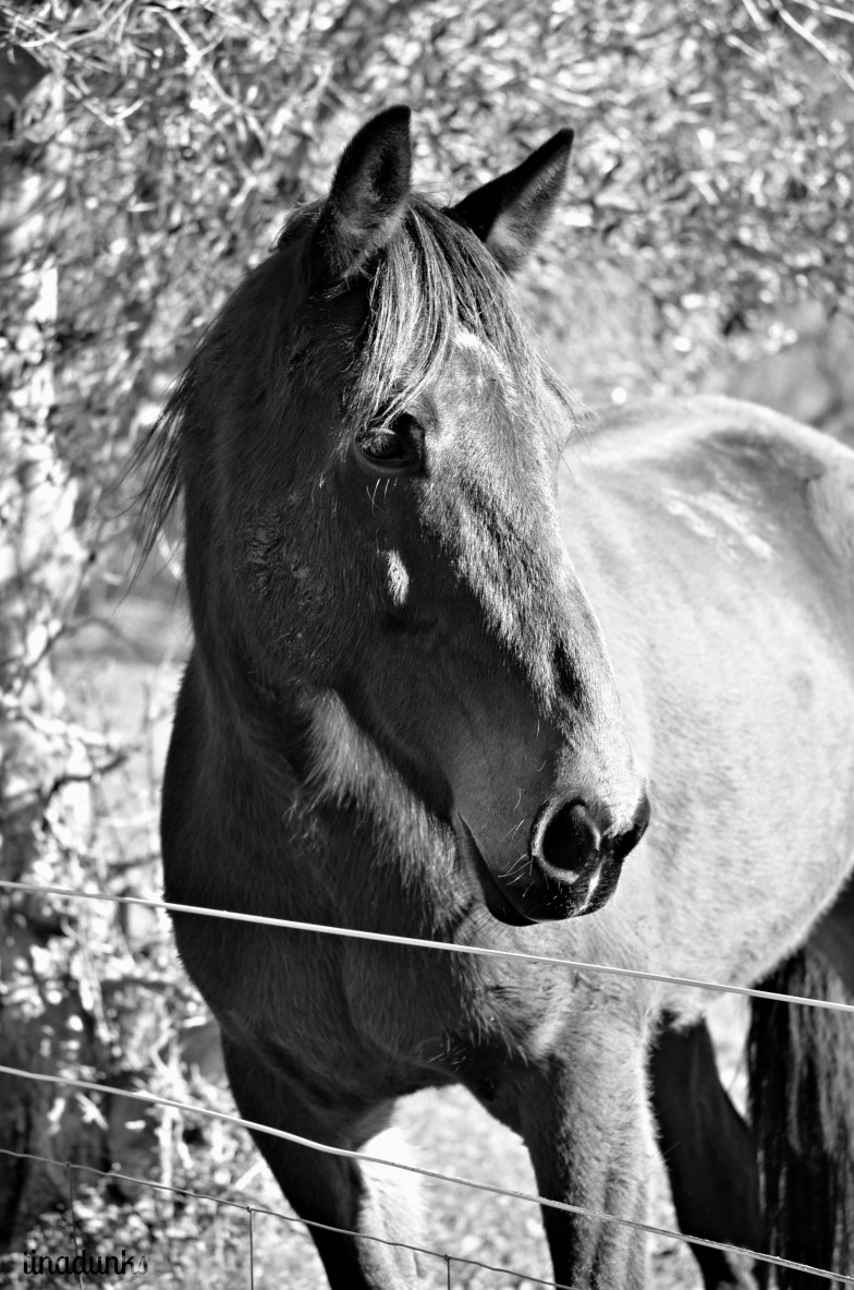 Neighbours Horse