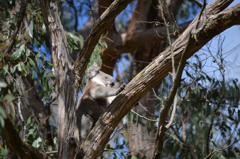 Koala.....I may have stalked him!