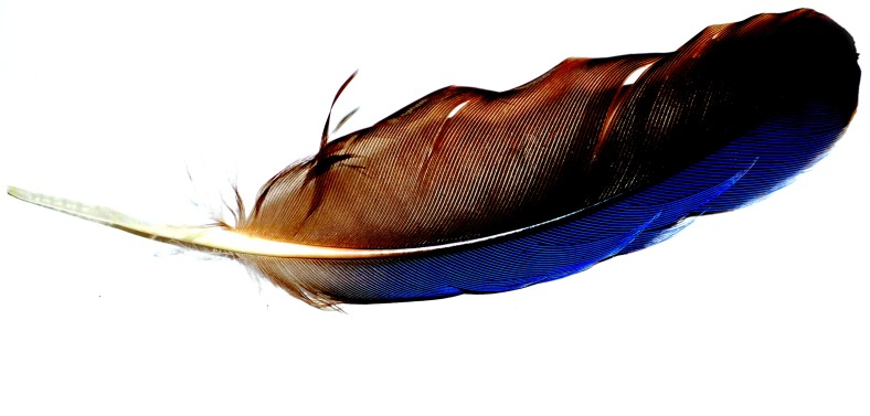 Backyard Feather