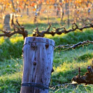 Vineyard Post
