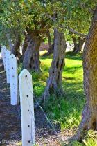 Salem Trees