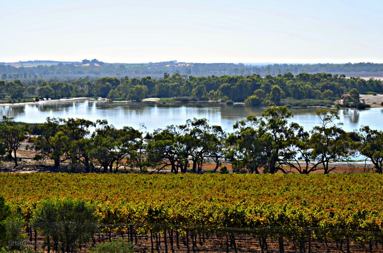 Banrock Station, Murray River View over Vineyard