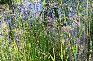 Wetland Zone