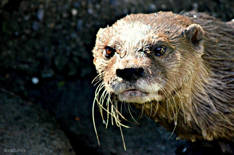 The Otters were totally captivating....in an odd kind of way.