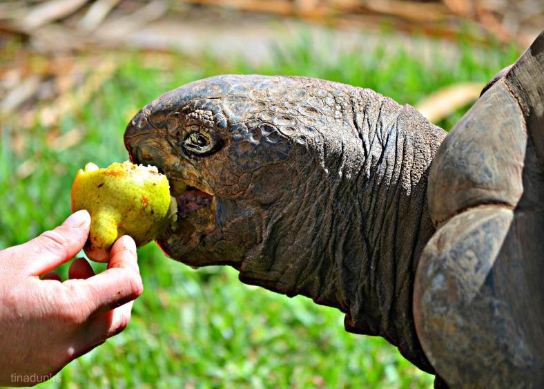 Mmmmm.....pear