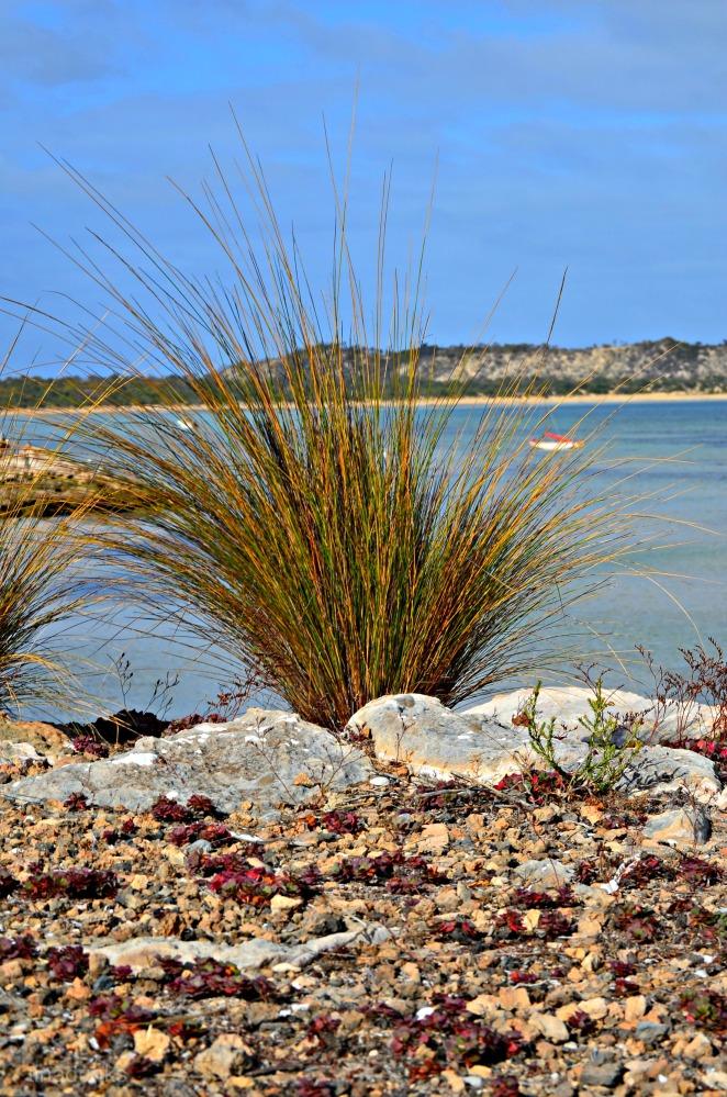 Coffin Bay (4/6)