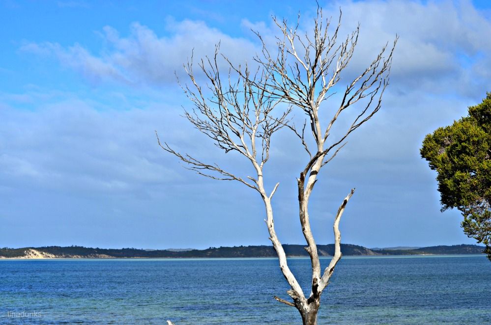 Coffin Bay (3/6)