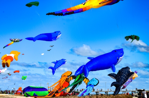 Kites 14
