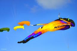 Kites 15