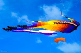 Kites 16