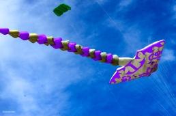 Kites 17