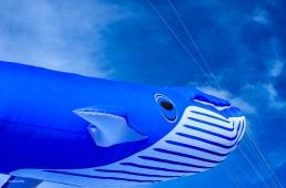 Kites 20