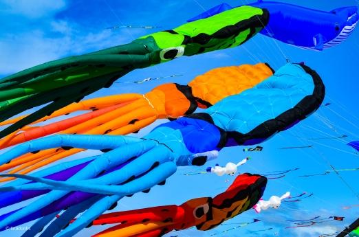 Kites 21
