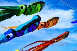 Kites 22