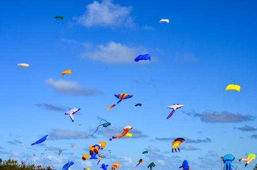 Kites 3