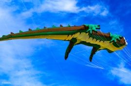 Kites 30