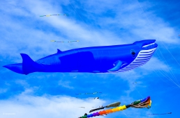 Kites 31