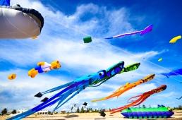 Kites 36