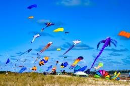 Kites 4