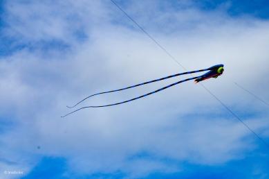 Kites 8
